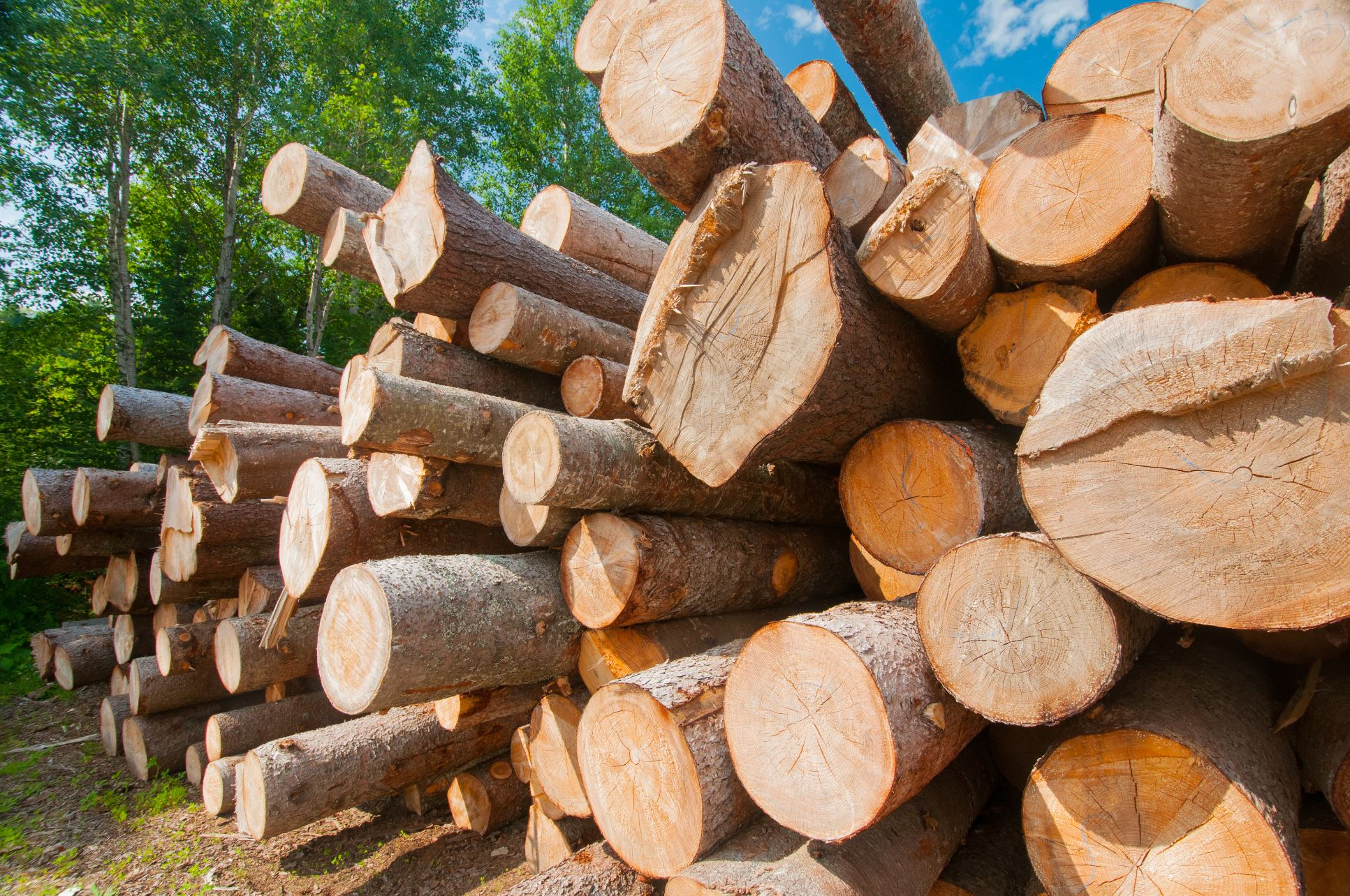 Timber Abbreviations
